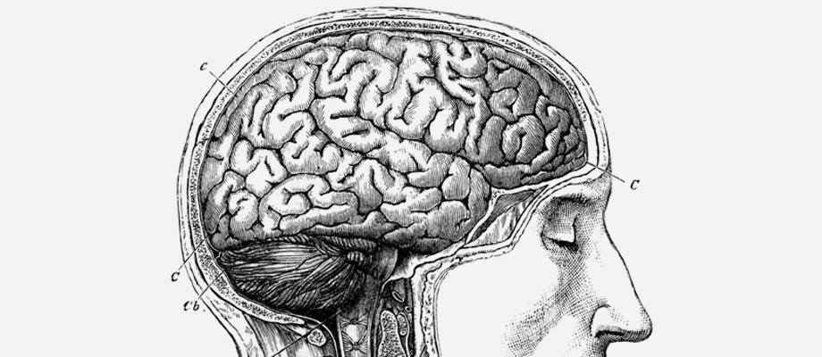 human_brain_list