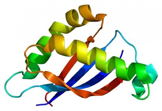 Görsel-1: Moleküler bağları ve flüoresan mikroskobu görüntüleri ışığında yapılmış, birebir mucin proteini illüstrasyonu