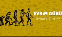 Evrim'e Giriş-4: Evrimsel Senaryolar
