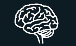 Neden Beyinlerimiz Küçülmeye Başladı?