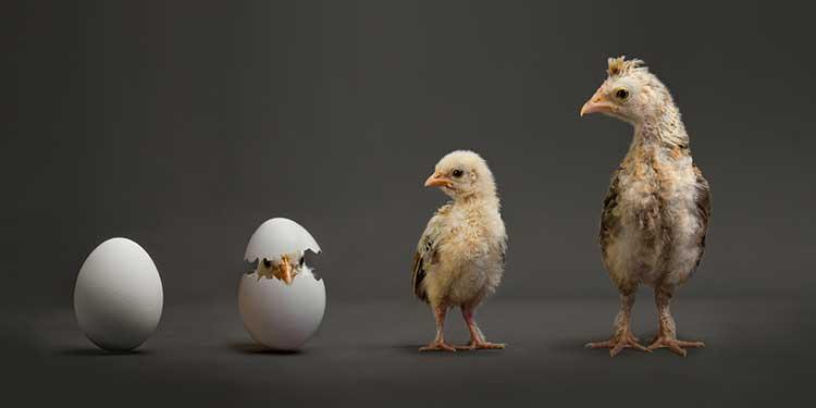 Yumurta mı Tavuktan, Tavuk mu Yumurtadan?