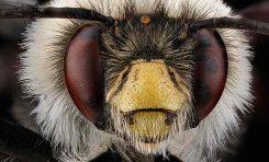 Yakın Çekim Arılar