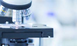 Bakterilerin Hücre Zarımızı Nasıl Deldikleri İlk Kez Filme Alındı