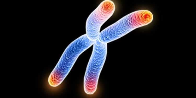 Telomer Yaşlanmayı Nasıl Geciktirir?