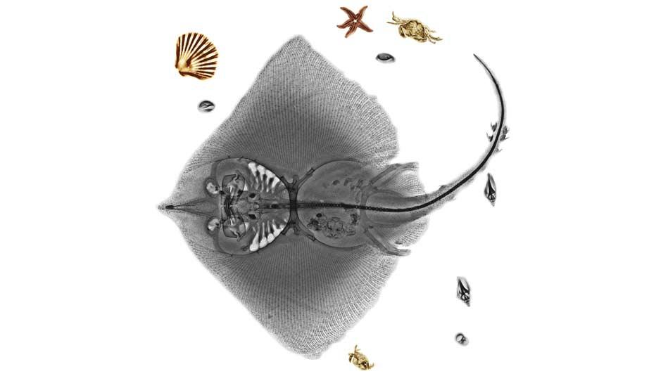 dogaya-bakisinizi-degistirecek-15-x-ray-goruntusu-bilimfilicom1