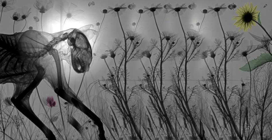 dogaya-bakisinizi-degistirecek-15-x-ray-goruntusu-bilimfilicom10