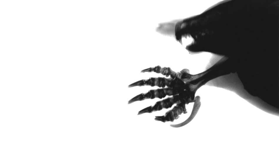 dogaya-bakisinizi-degistirecek-15-x-ray-goruntusu-bilimfilicom12