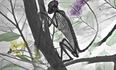Doğaya Bakışınızı Değiştirecek 15 X-RAY Görüntüsü
