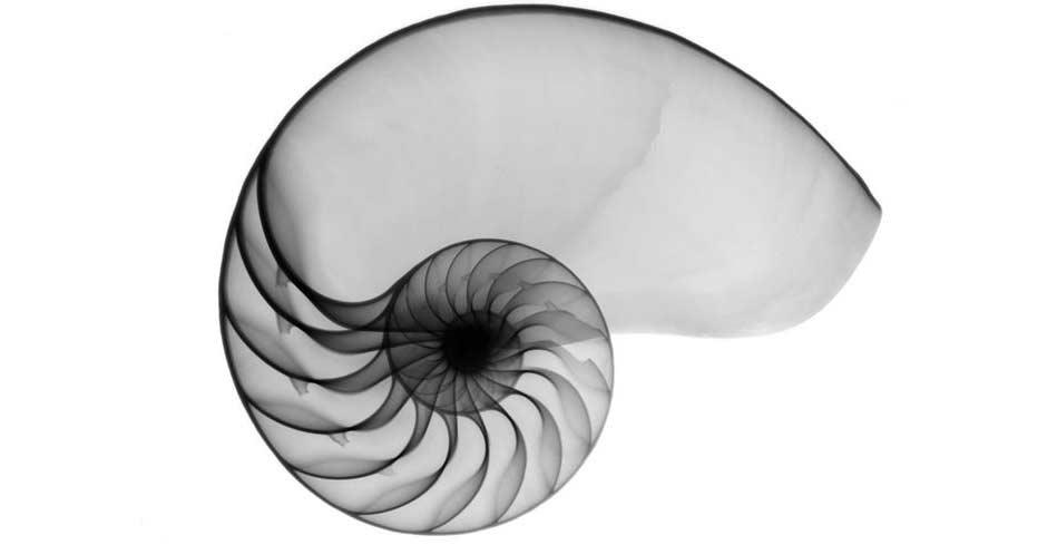 dogaya-bakisinizi-degistirecek-15-x-ray-goruntusu-bilimfilicom4