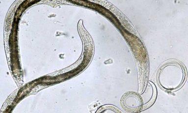 Ev Sahibinin Beynini Kontrol Eden 8 Parazit