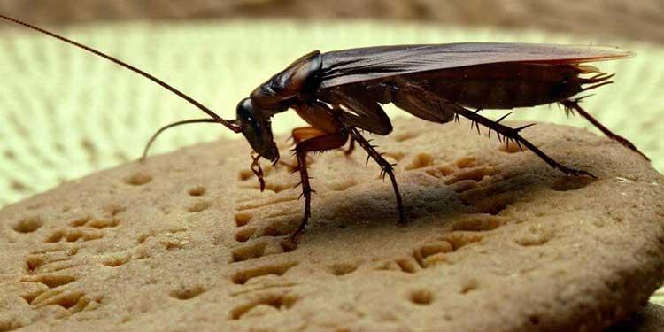 Hamam Böcekleri de Kişilik Sahibi