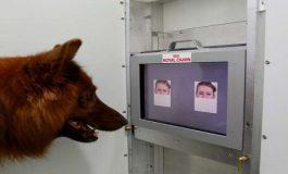 Köpekler Mutlu mu Üzgün mü Olduğunuzu Anlayabiliyor