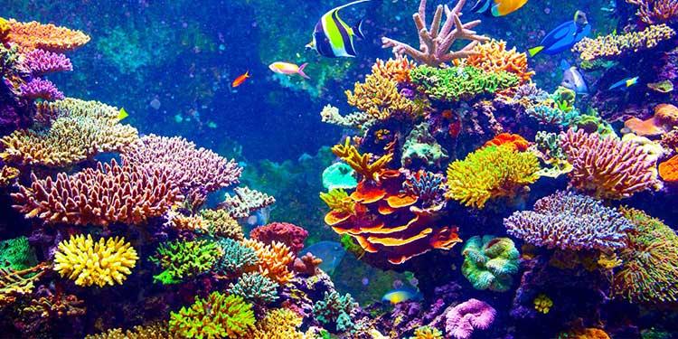 Mercanlar Plastik Yiyorlar