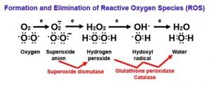 Süperoksit oksijen türü moleküller