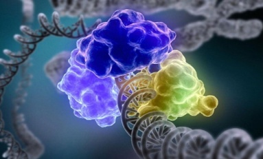 DNA Hasar Sinyalleri Nasıl Çalışır?