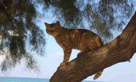 Kedilerin Yerel Vahşi Yaşama Çevresel Etkileri