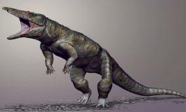 Krokodil Ataları Dinozorlardan Önce Baş Avcıydı