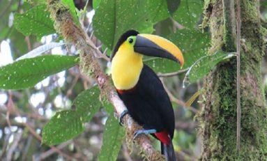 Kuşlardaki Renkli Tüyler Cinsel Seçilim İle Alakalı Değil !