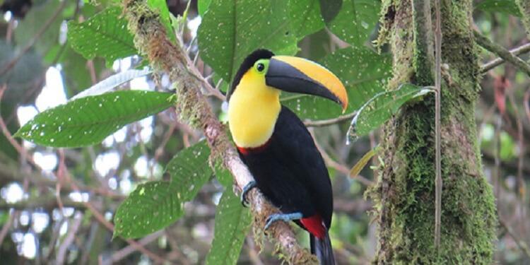 Kuşlardaki Renkli Tüyler Cinsel Seçilim İle Alakalı Değil!