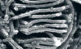 Yaygın Bir Antibiyotik Tüm Deney Sonuçlarını Şaşırtmış Olabilir
