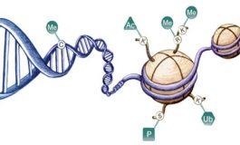 Tüm genetik özellikler DNA ile aktarılmıyor