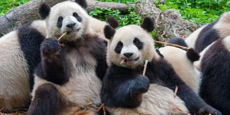 antibiyotikler-nerede-bulunur-panda-bilimfilicom