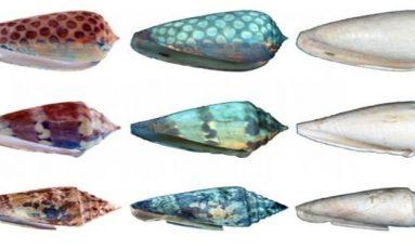 Deniz kabukları ve kaybolan güzellikleri