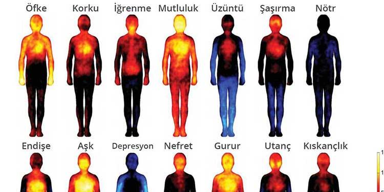 Hislerin Vücut Haritası