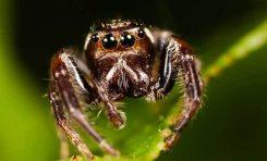 İnsanlar Örümceklerden Neden Çok Korkar?
