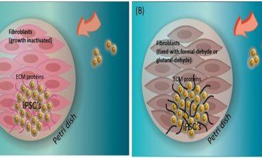 Ölü Besleyici Hücreler, Kök Hücrelerin Büyümesine Destek Oluyorlar
