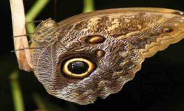 Kelebeklerin ve Tırtılların Üzerlerindeki Benekler Avcıları Korkutuyor!