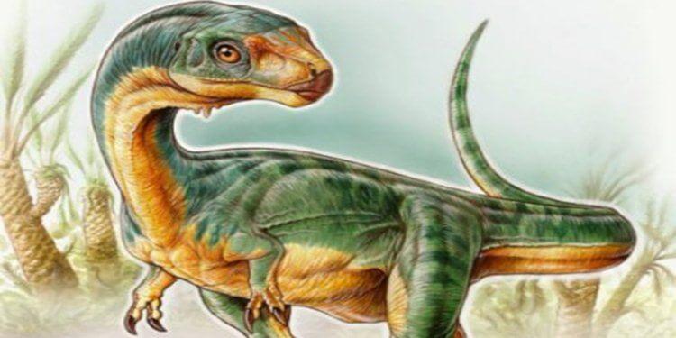 T. rex'in otobur dinozor eşi keşfedildi