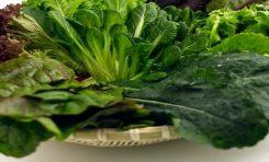 Yeşil Yapraklı Sebze Tüketimi Beyin Sağlığını Güçlendiriyor