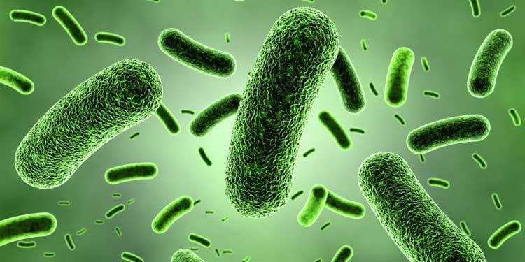 Daha güvenli GDO'lar üretilmesini sağlayacak Sentetik aminoasit  bulundu