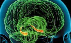 Hafıza ve Hipokampus İlişkisinde Yeni Bir Teori