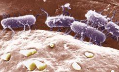 İlaçlara karşı dirençli bir tifo mikrobu salgını başladı