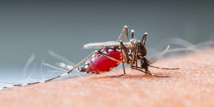 Nasıl Yapılır?- Evde Bitkisel Böcek İlacı Yapımı