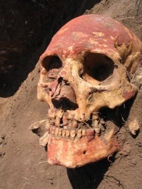 Görsel : Yamna toplumuna ait bir kafatası - kırmızı toprak boyası nedeni ile kırmızılaşmış halde Natalia Shishlina