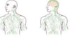 Beyin ve Bağışıklık Sistemi Arasında Yeni Bağlantılar Bulundu!