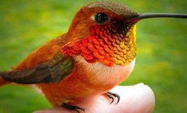 Bilinen En Küçük Kuş Türü
