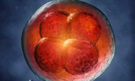 Biyologlar Açıkladı: Evrim Öngörülemez ve Tersinemez