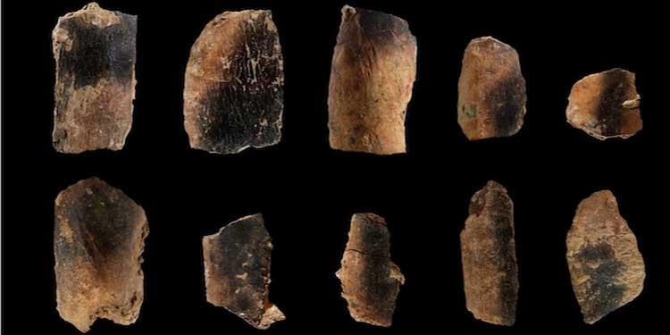Qesem Cave'de bulunan yanmış hayvan kemikleri. Credit: Ruth Blasco