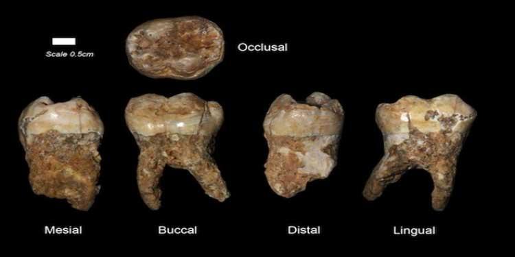 Bulunan 400,000 Yıllık Dişlerin Tartarında İnsan Kaynaklı Kirliliğin İlk Delillerine Ulaşıldı!