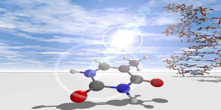 DNA Kendisini Ultraviyole Işıktan Nasıl Koruyor?