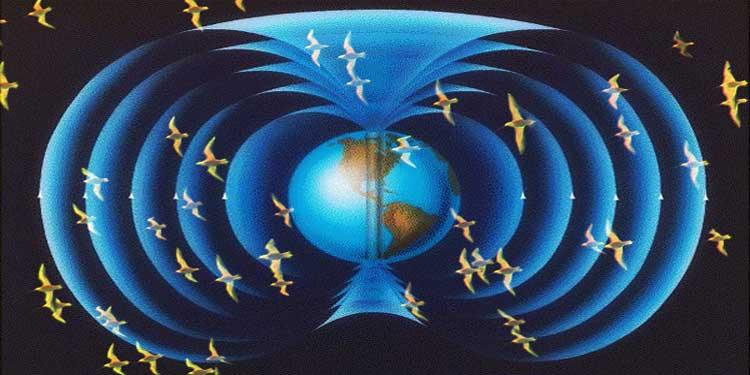 Hayvanların Manyetik Alan Duyularına Mikroskobik Yaklaşım!