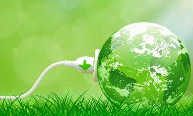 Hollanda'da Bitkiler Elektrik Üretiyor