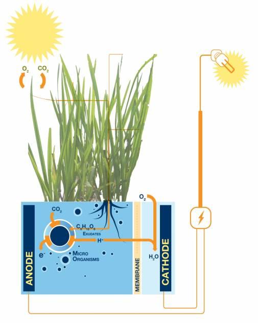 hollandada-bitkiler-elektrik-uretiyor-bilimfilicom1