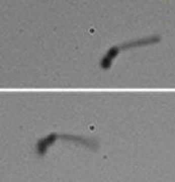 Görsel : ACS - Nanoyüzücüler