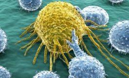 Kanser kök hücrelerini hedef alan şeker nanoparçacıklar