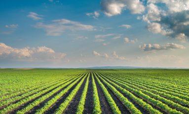 Karbon salınımını kesmek, dolaylı olarak açlığa sebep olabilir